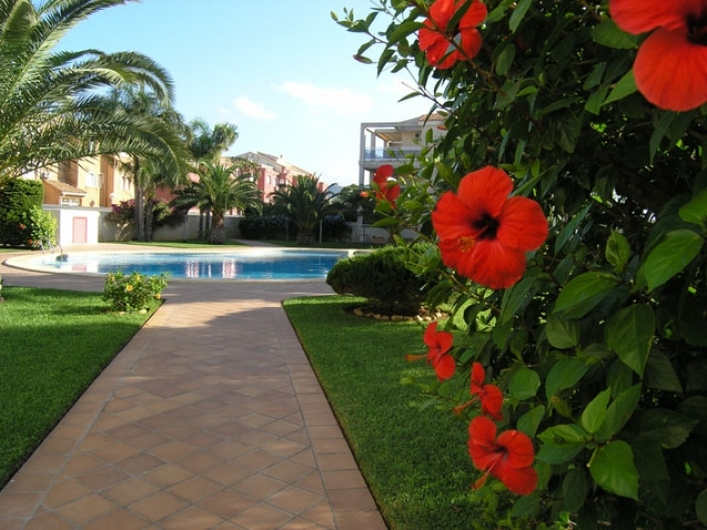 Apartments in Denia 4730